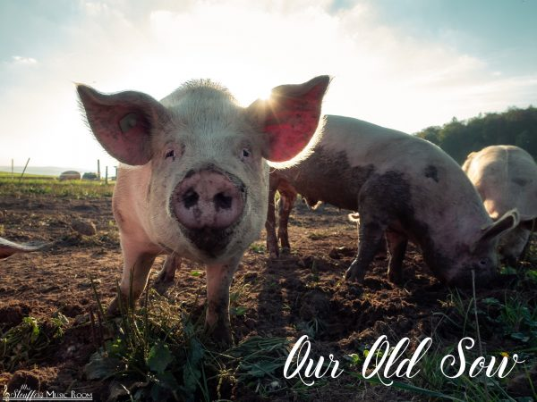 image our old sow song